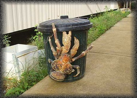 Are Australian Spiders Really That Big